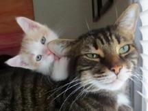 kitten-bathing-cat1